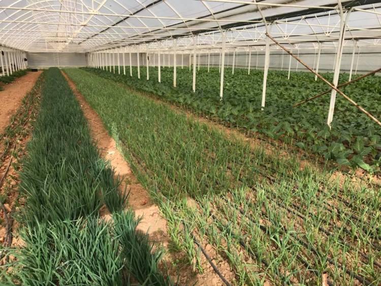 الزراعة في جبزي