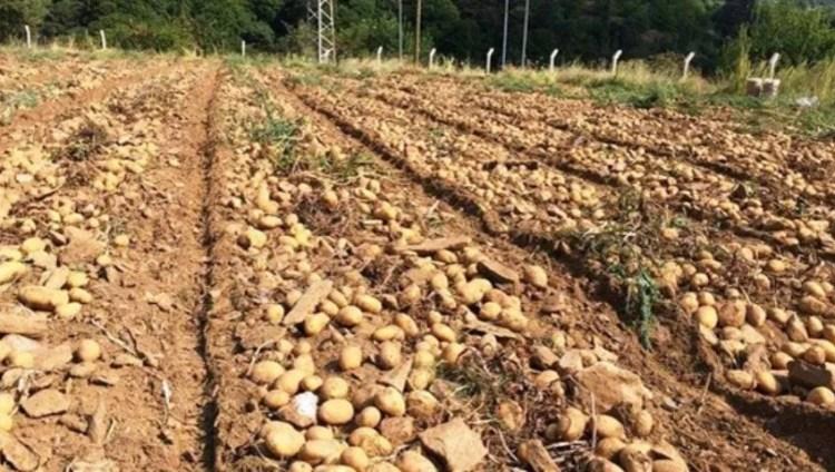 الزراعة في نيف شهير