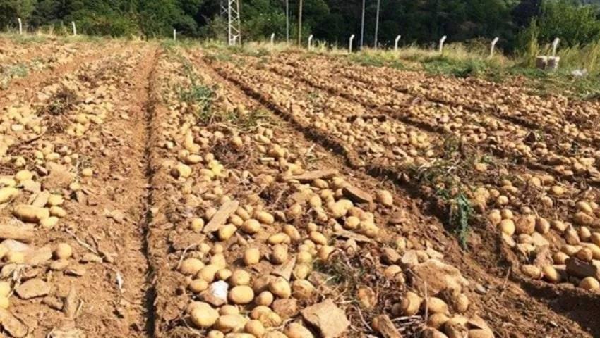 Landwirtschaft in Nevsehir