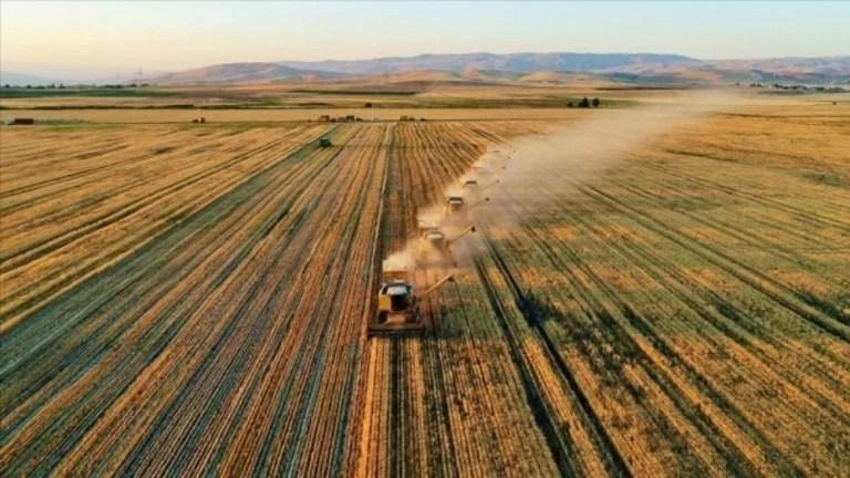 Agricoltura in Turchia