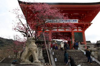 Plum blossoms at Kiyomizu Temple in kyoto.