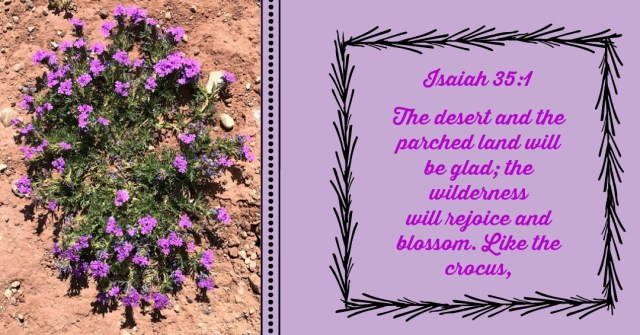 Isaiah 35:1 God will cause the deserts to bloom