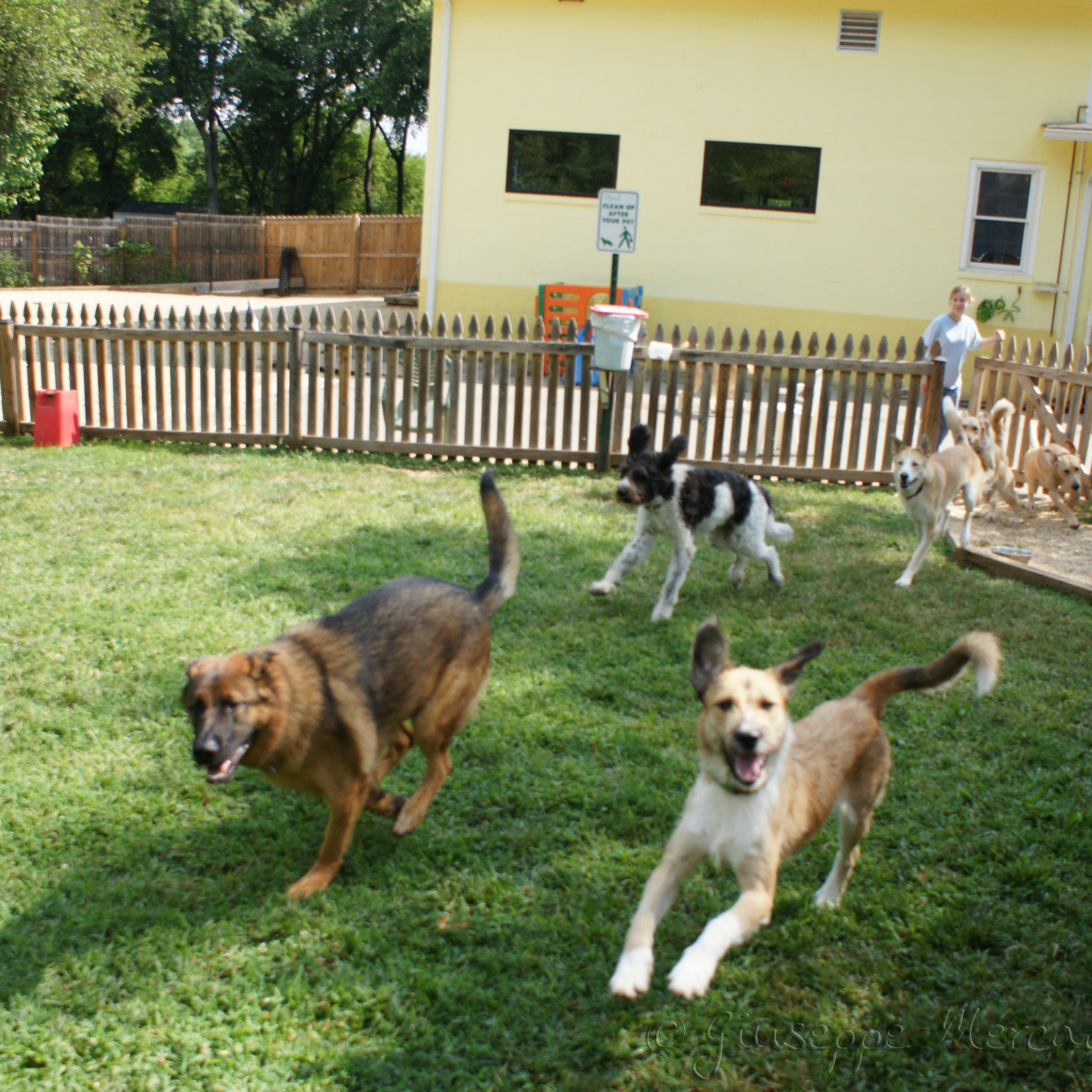 Doggy Day Care Business for Sale