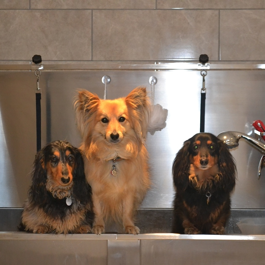 Dog Grooming Business For Sale in the UK