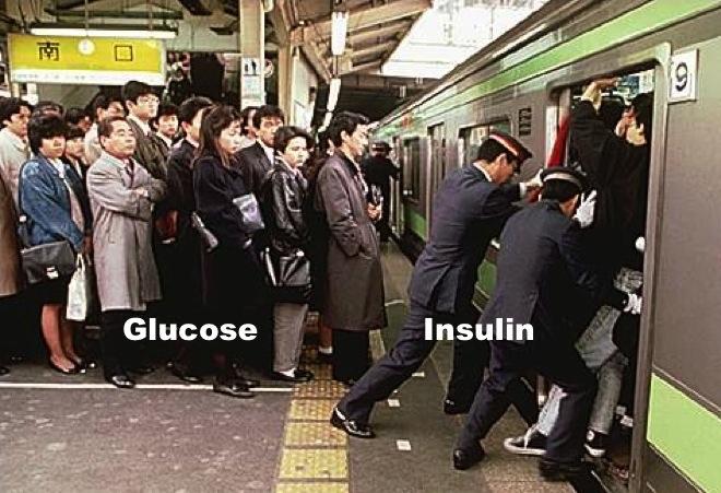 Insuliiniresistenssi - kaikkien elintasosairauksien äiti, osa 1