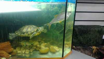 Можно ли держать черепаху в аквариуме с рыбками: советы ...