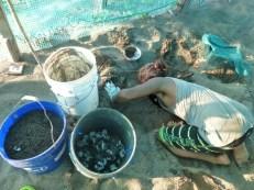 exhuming the Baula nest