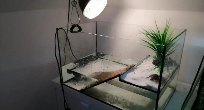 for turtles choose the best uvb lights