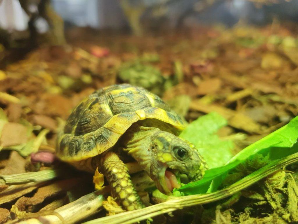 żółwioterapia