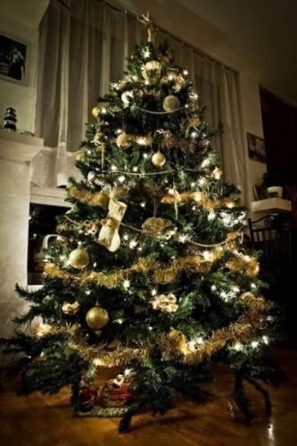 Karácsonyfa - A Turulmadár nyomán