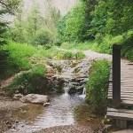 Wąwóz Homole – blisko natury w Pieninach