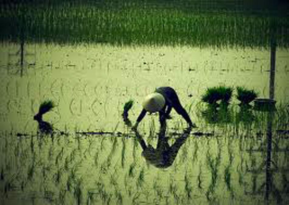 Tâm Thơ, Ngô Nguyễn Trần – Dân Nước Việt