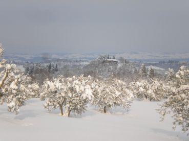 White Tuscany 6
