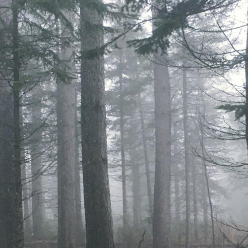 Misty George Washington Pines ten minutes outside of Grand Marais, MN offers 3.3 km hiking or cross country ski trail