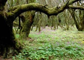 Bosque Cedro