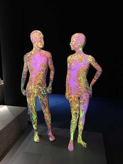La Galería del Hombre es un espacio dedicado al ser humano en el Museo de Ciencias Naturales de Bruselas