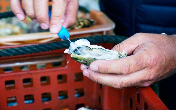 Francia es uno de los mayores consumidores de ostras del mundo