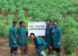 Economic Diversification: Youths And Agriculture
