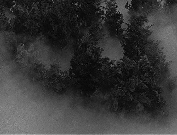 bewegend woud