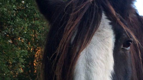 tussen Hemel en Paarden, ruimte voor een nieuw perspectief