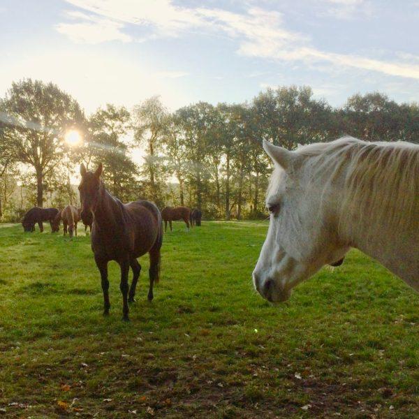 systemisch coachen met paarden