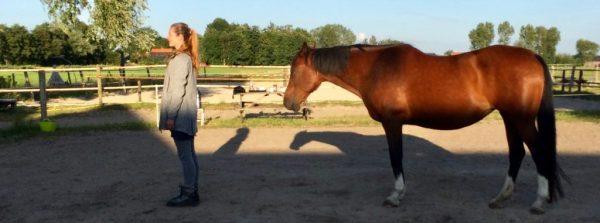 Systemische Essenties tussen Hemel en Paarden