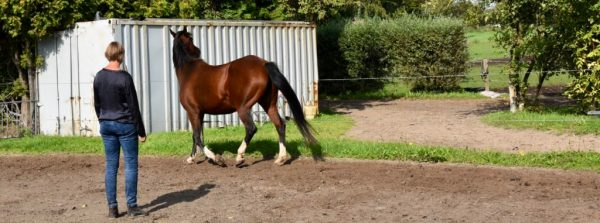 Smile in de lijn houden, zegt Yolande van Wijk na haar paardencoachsessie tussen Hemel en Paarden