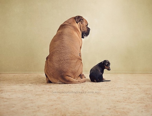 Η Serena και τα σκυλιά της