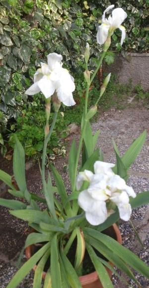 """Olor suave de una flor..."" PHOTO: O.V.M."