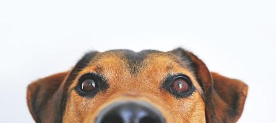 kutyatáp a kutyáknak