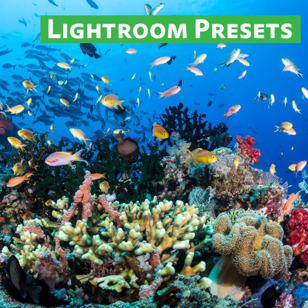 Lightroom Preset Pack Underwater Photography