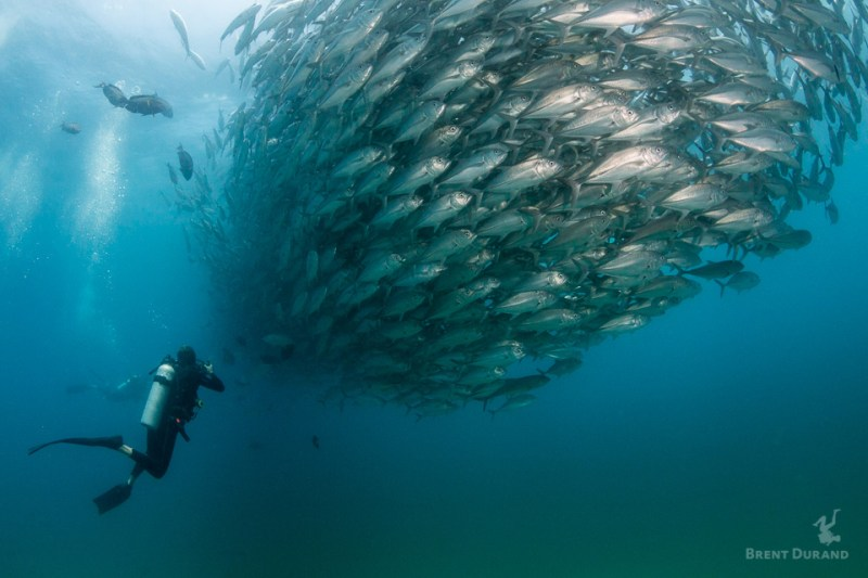 packing underwater camera gear