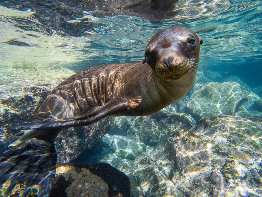 sea lion photo with gopro raw setting