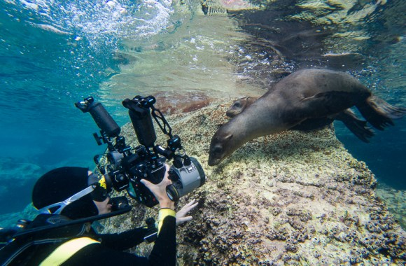 scuba-diver-and-sea-lion-shot-on-gopro