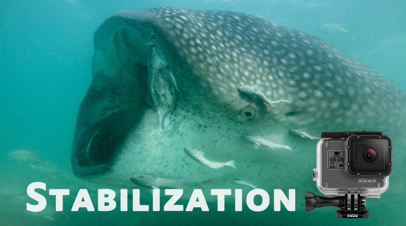 whale shark screenshot from stabile GoPro footage