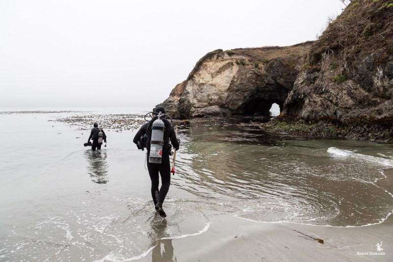 beach diving mendocino headlands california