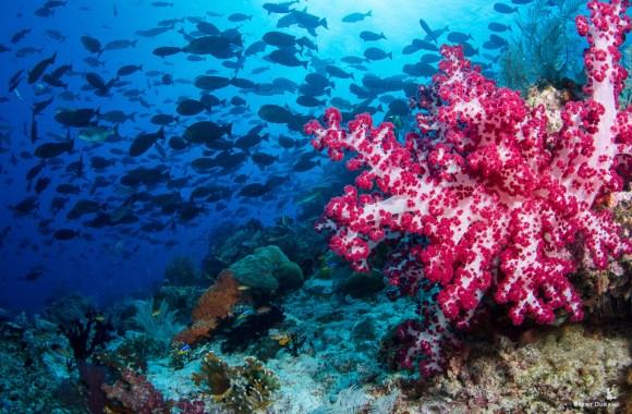 pink-soft-coral-underwater-in-raja-ampat-indonesia