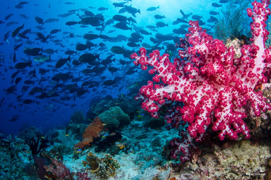 soft coral underwater in raja ampat indonesia