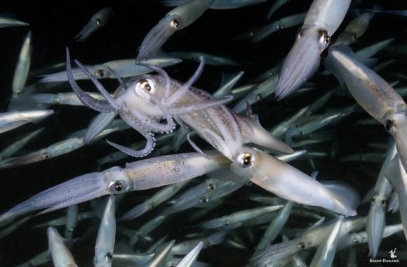 redondo-beach-squid-run