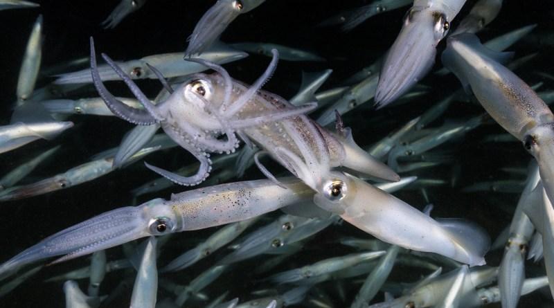 redondo beach squid run