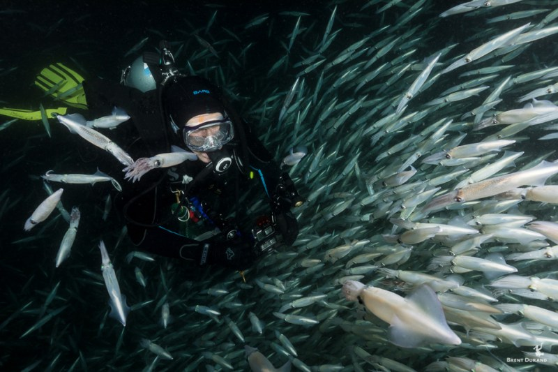 scuba diver and mating squid
