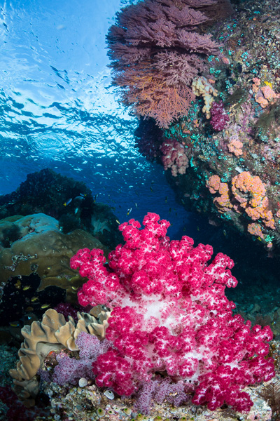 soft coral in the passage raja ampat