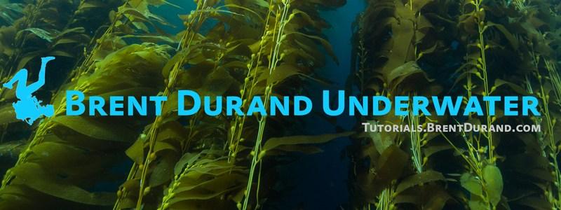 lens life underwater photo newsletter