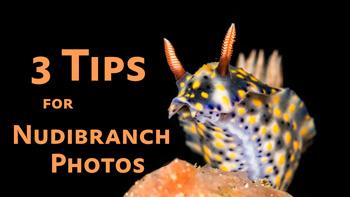 3 Nudibranch Photo Tips video tutorial thumbnail