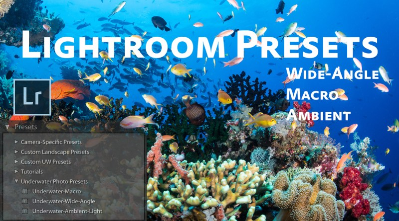 Free Lightroom Underwater Photo Presets | Brent Durand
