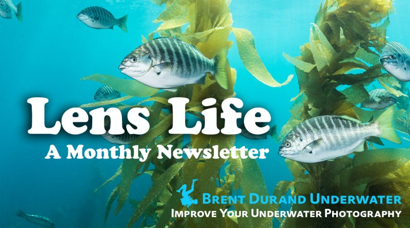 Lens Life Photo Newsletter by Brent Durand
