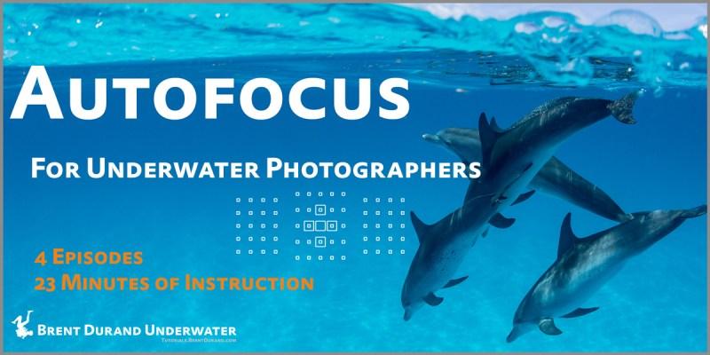 autofocus video tutorial series
