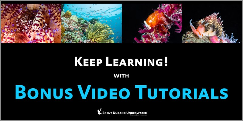 video tutorial topics for underwater photography