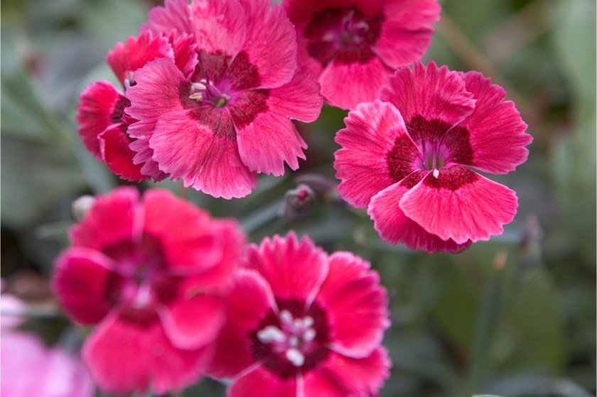 2048x1365-Pinks-to-grow-LI1561252-a857845
