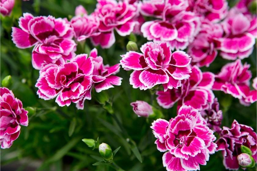 2048x1365-Pinks-to-grow-LI3048735-459af34